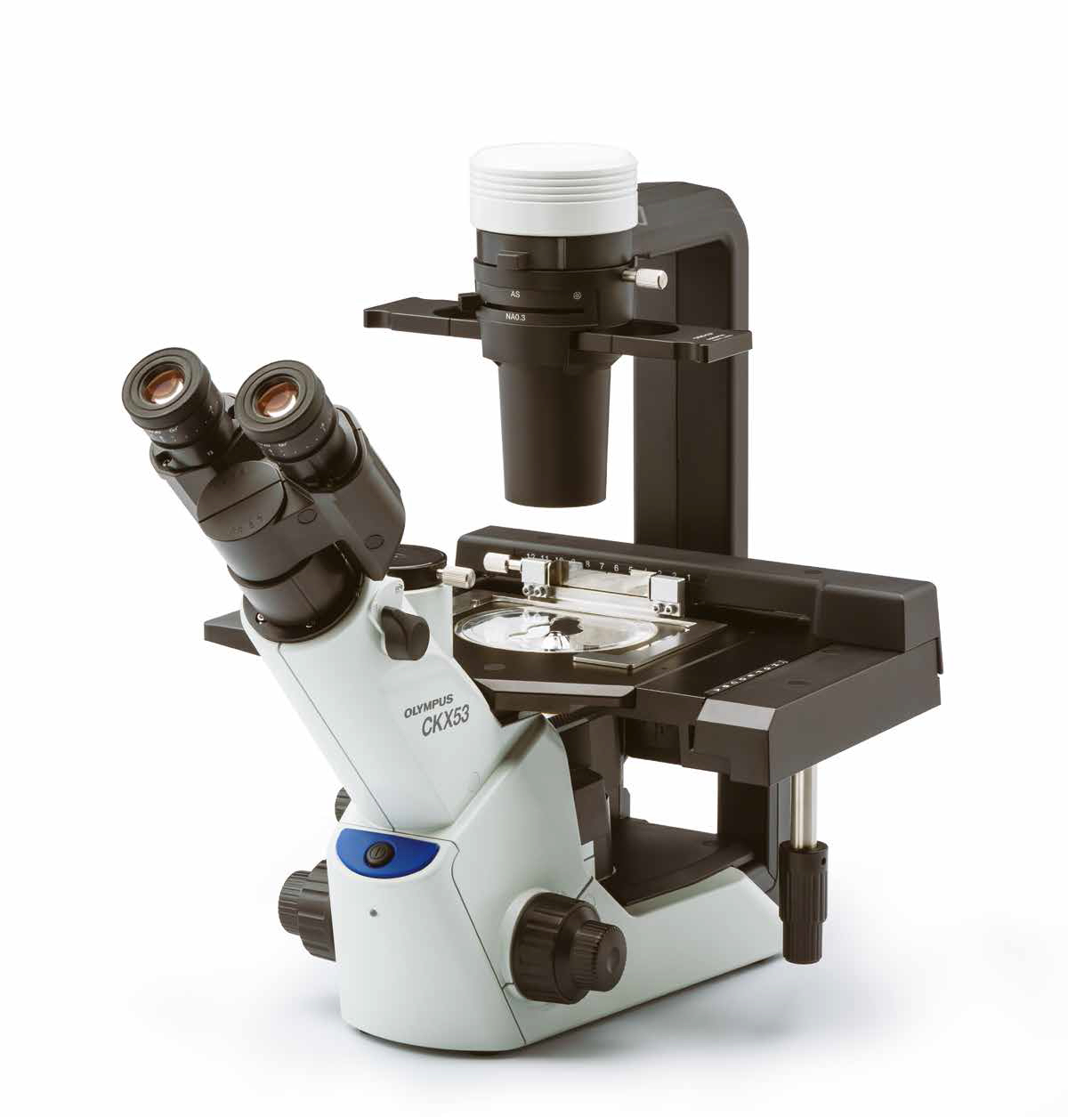 Olympus CKX53 inverted microscope