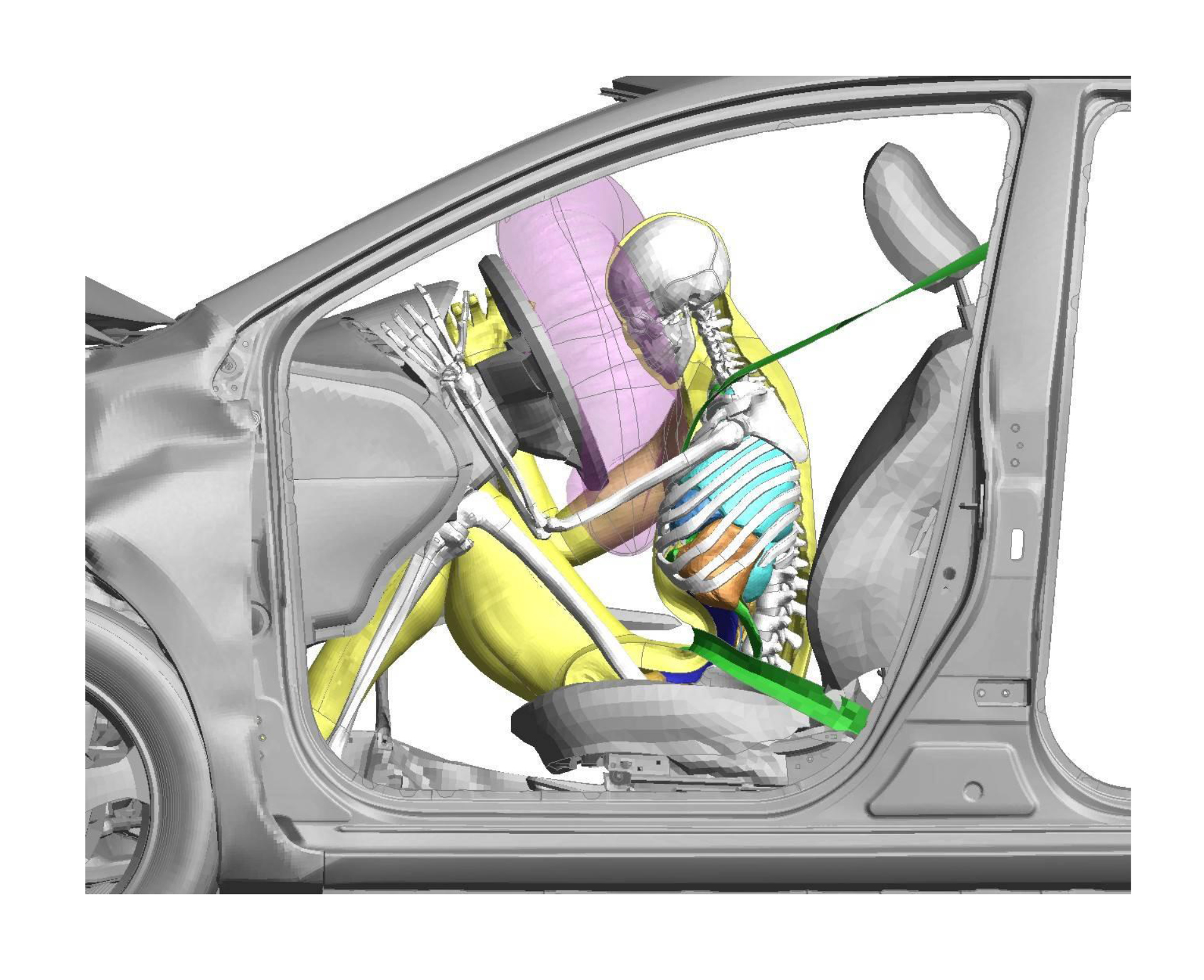 Simulating the motion of internal organs during crash testing