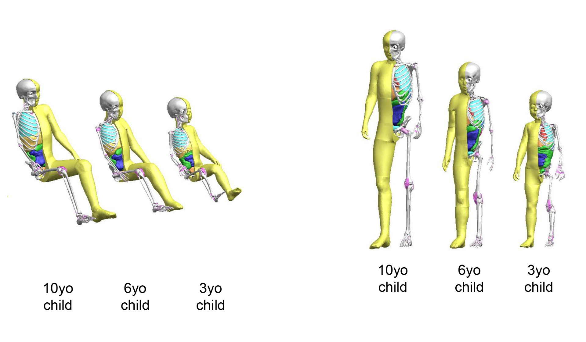 Child Models Now Available For Crash Test Simulation